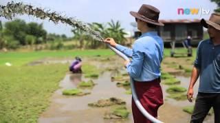 getlinkyoutube.com-new)tv - เกษตรซ้าด ตอนที่ 42 ปลูกหญ้านวลน้อย