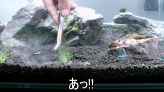 getlinkyoutube.com-[HD] ヘアーグラスの草原を作る! ②ヘアーグラスを植える篇