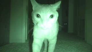 getlinkyoutube.com-What Cats Do At Night...
