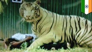 動物園で転落 トラに襲われる