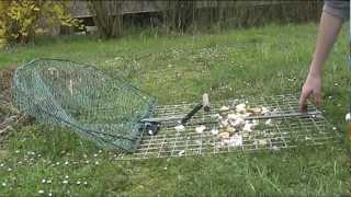 getlinkyoutube.com-Piège à oiseaux pour pie