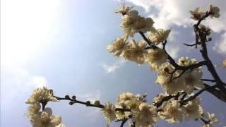 getlinkyoutube.com-박종훈(Chong Park) - A sad motive - Spring Waltz OST