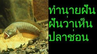 getlinkyoutube.com-ฝันว่าเห็นปลาช่อน (พร้อมเลขเด็ด)