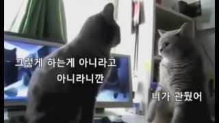 getlinkyoutube.com-쎄쎄쎄하는 고양이[한글자막]