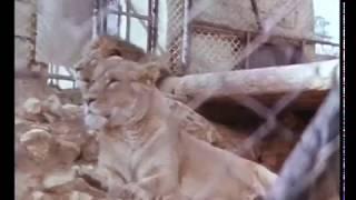 """getlinkyoutube.com-גן החיות התנ""""כי הישן - The old Biblical Zoo in Jerusalem"""