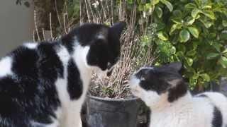 INTENSE CAT FIGHTING