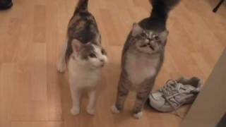 Kittens And Cats Meowing