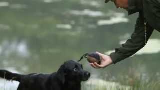 getlinkyoutube.com-Shooting Times & Skinners: Gundog training part 4