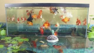getlinkyoutube.com-Inverted Aquarium In My Pond