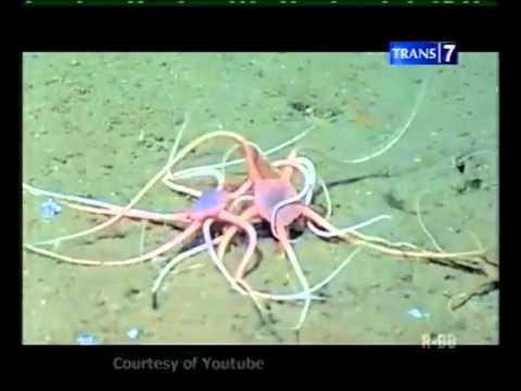 7 hewan laut bbentuk aneh