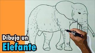 getlinkyoutube.com-Dibujos de animales 5/8 - Cómo dibujar un elefante - elephant drawing