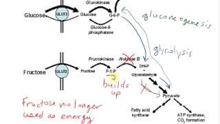 biochemistry wgu Biochemistry, sometimes called biological chemistry, is the study of chemical processes within, and relating to, living organisms[1] by controlling information flow through biochemical signaling and the flow of chemical energy through metabolism, biochemical processes give rise to the.