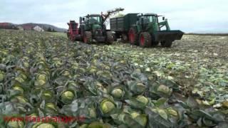 getlinkyoutube.com-Cabbage Harvester,