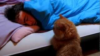 """getlinkyoutube.com-Our Funny Cat: """"Why Won't He Wake Up to Play With Me?"""""""