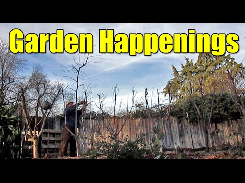 What's Growing On? Happenings Around The Garden 01/31/17