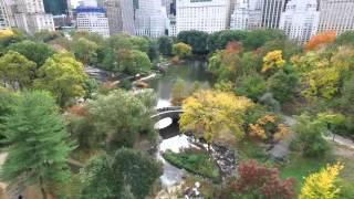 SCENES_AlexRad_Central Park