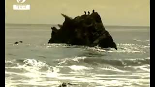 getlinkyoutube.com-Unknown Giant Monster found after tsunami