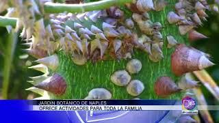 Conozca las actividades en el Botanical Garden de Naples. Gaby Romero nos cuenta más