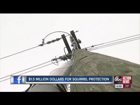 Upgrades may prevent repeat of squirrel-caused TECO power failure that shut off Tampa water