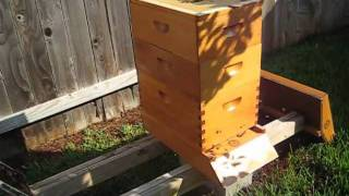 getlinkyoutube.com-Beekeeping: The Demise of My Hive