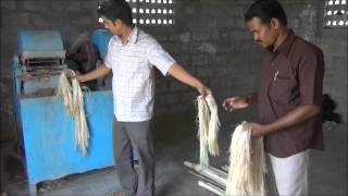 getlinkyoutube.com-Banana Fibre Extraction
