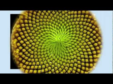 Fibonacci Numbers- Numbers in Nature