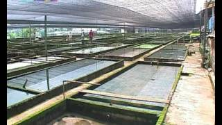 getlinkyoutube.com-Homo Aquarius S03E02/Домашний аквариум (3 сезон) - 02 серия из 16