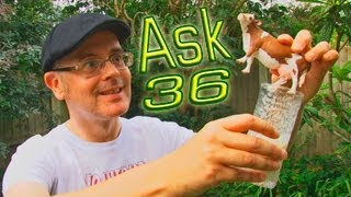 Ask MisterDuncan Lesson 36,Learning English with Mr Duncan