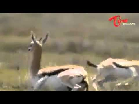 Funny: poor leopard, smart deer