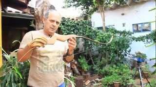 getlinkyoutube.com-BrasilBows - Palo-Santo: o arco mais rápido do Brasil