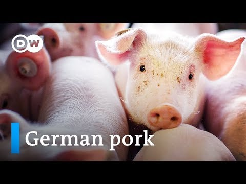 The Booming Meat Industry - Germany the world's second biggest pork exporter | Made in Germany