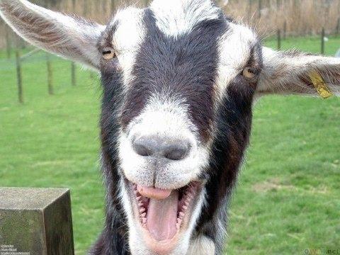 Důkaz, že člověk pochází z kozy. Neuvěřitelné :-O
