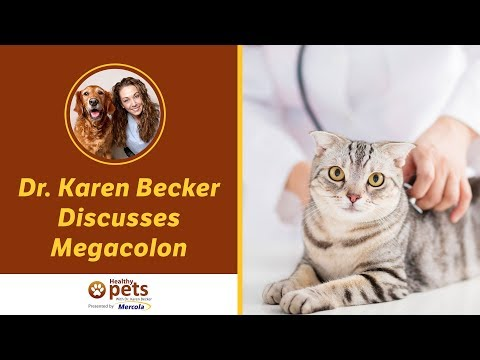Dr. Karen Becker Discusses Megacolon