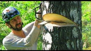 getlinkyoutube.com-Как спилить дерево бензопилой. Как спилить дерево в нужном направлении