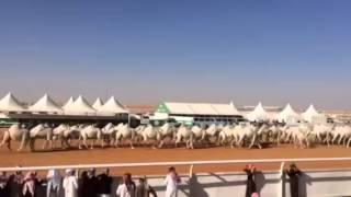 لحظة عرض منقية الشيخ عبدالله بن دلمخ آل محمد السبيعي