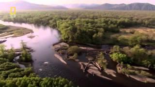 getlinkyoutube.com-ناشيونال جيوغرافيك أبو ظبي - براري روسيا - الغابة السرية