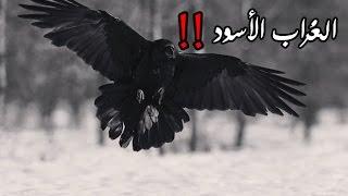 getlinkyoutube.com-قصص رعب : ( الغراب الاسود ) كااملة !!