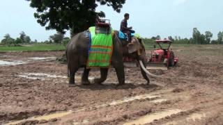 getlinkyoutube.com-สีสัน ลีลา ข้าวอินทรียขี้ช้าง ไหนช้างไหนคน