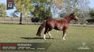 Miniatura video Lote 12 - Remate El Redimido