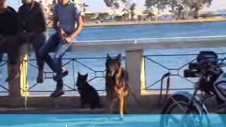 جريدة الوطن :سوق الكلاب فضيحة الاسماعيلية