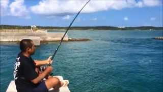 getlinkyoutube.com-30kgのロウニンアジを泳いで手づかみでキャッチ(松川浩之) Terrible too movie to catch by hand swimming Giant trevally of 30kg