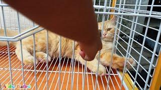 Si Meong - Lagu Anak Populer - Deba Bermain Kucing Lucu