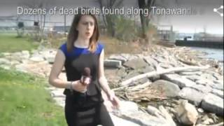 getlinkyoutube.com-Birds, Fish, and Animals dying off May 9, 2015- May 12, 2015