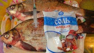 getlinkyoutube.com-Засолка крупной речной рыбы  .  Мой рецепт !