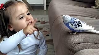 getlinkyoutube.com-Muhabbet Kuşu Ve Minik Kız Mutlaka İzleyin