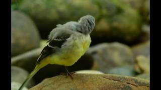 getlinkyoutube.com-Most beautiful creature video #2 - Wildlife, animals and bird photography