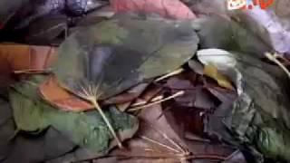 iProud - Bengkel Kriya: Produk Kerajinan Daun Keringnya Merambah ke Mancanegara.flv