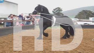 getlinkyoutube.com-سبحان الله العاديات Amazing horse - English CC