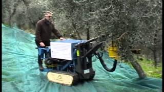 Macchina raccolta olive