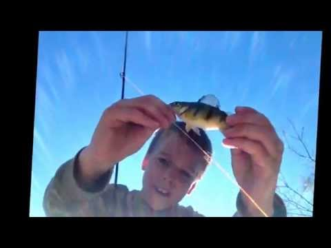 Bluegill and perch fishing wiht fly rod and ryan